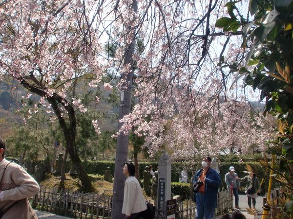 桜パワー継続中_a0197730_050767.jpg