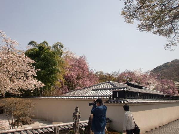 桜パワー継続中_a0197730_0521692.jpg