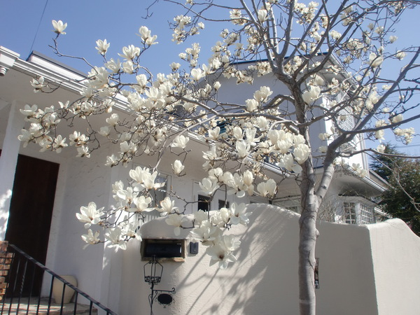 桜パワー継続中_a0197730_141283.jpg