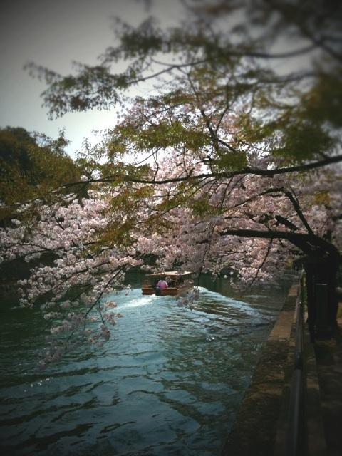 春の京都へ ~~ 前半編 ~~_a0060141_13515142.jpg