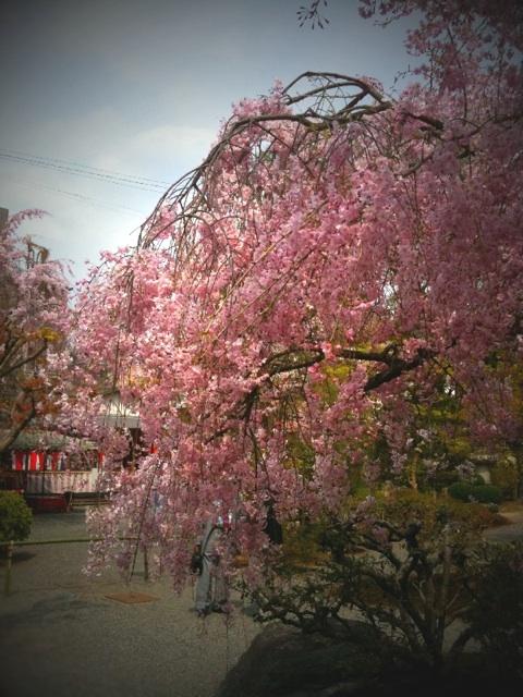 春の京都へ ~~ 前半編 ~~_a0060141_1494587.jpg