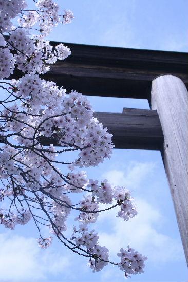 護国神社の桜_f0082141_10172322.jpg