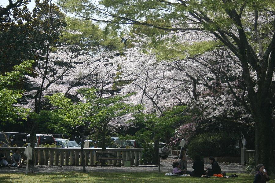 護国神社の桜_f0082141_10195315.jpg