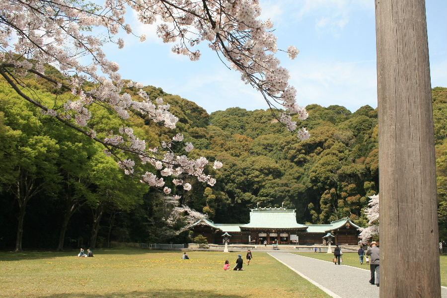 護国神社の桜_f0082141_1019584.jpg