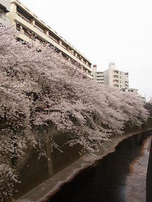 春ですねぇ_e0179948_20432256.jpg