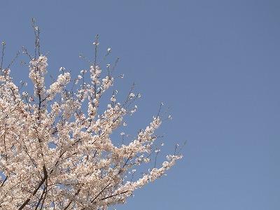 春ですねぇ_e0179948_20442496.jpg