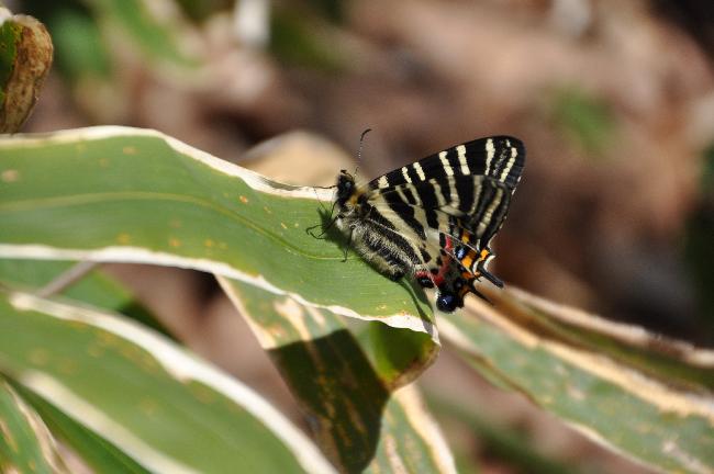 2011年4月の蝶_e0194952_2092899.jpg