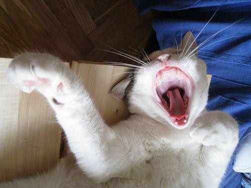 にゃんこ写真集『ゆる猫びより』_a0028065_2158992.jpg