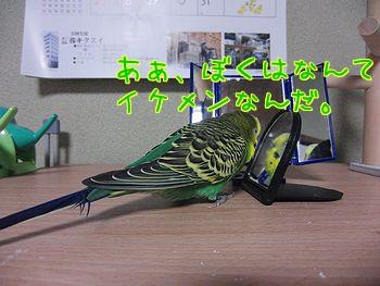 f0196665_0453634.jpg