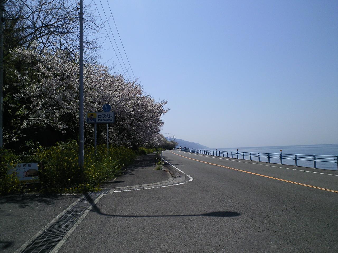 海桜_c0001670_21351619.jpg