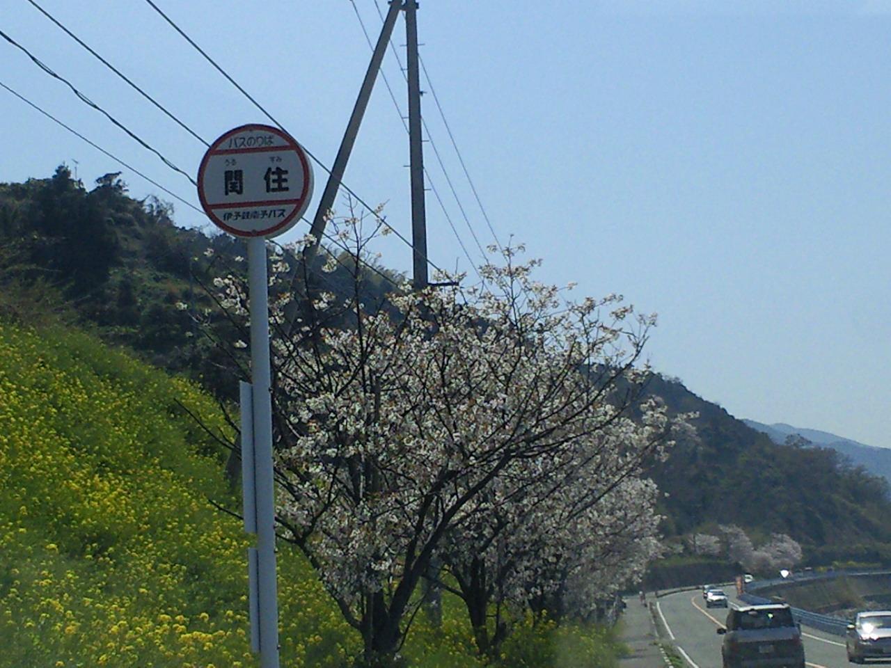 海桜_c0001670_21361393.jpg