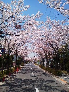 日本香堂の「桜はじめ」で癒される_d0169072_21123899.jpg