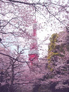 桜_b0003474_9514071.jpg