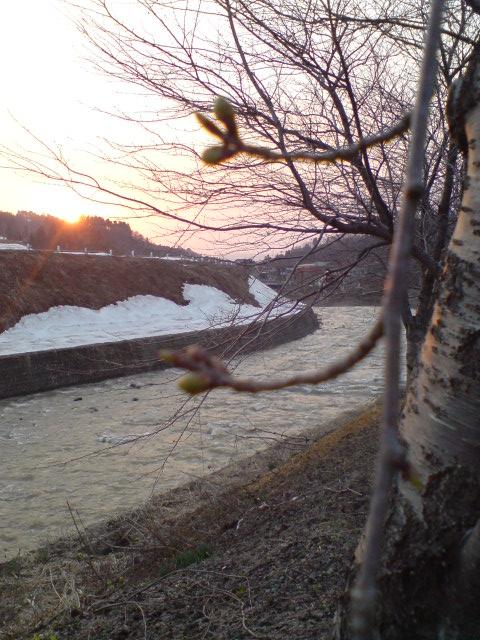 夕日と月と桜。_d0182179_1913520.jpg