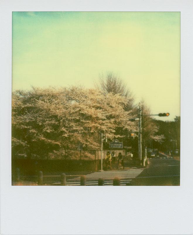 春はまた来ます_a0033881_1175083.jpg
