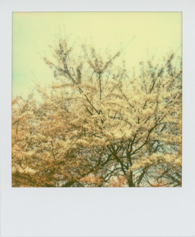 春はまた来ます_a0033881_1181077.jpg