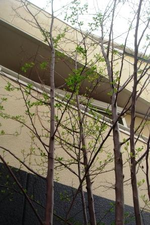 庭。_c0161981_18142691.jpg