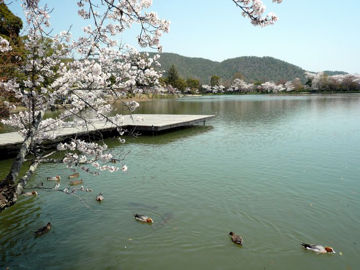 京都見物 2_b0093088_10505288.jpg