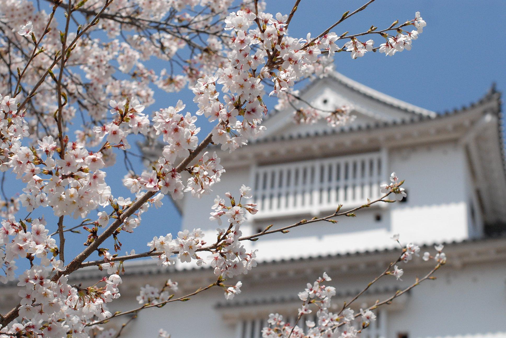 桜舞い上がる道を_b0058796_18504797.jpg