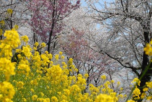 桜舞い上がる道を_b0058796_18511337.jpg