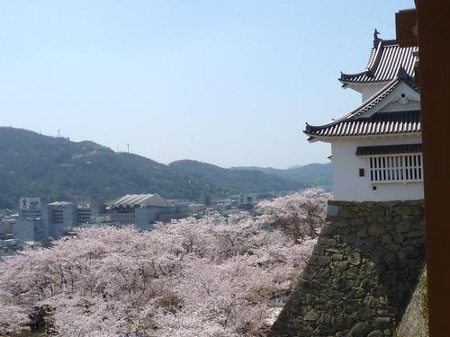 桜舞い上がる道を_b0058796_18512874.jpg