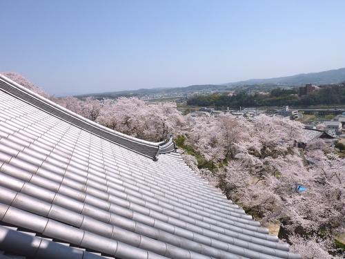 桜舞い上がる道を_b0058796_18514176.jpg