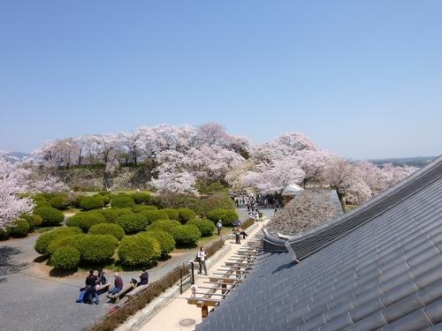 桜舞い上がる道を_b0058796_18515351.jpg