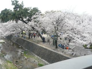 桜満開!<アクティブライフ夙川>_c0107602_13293689.jpg