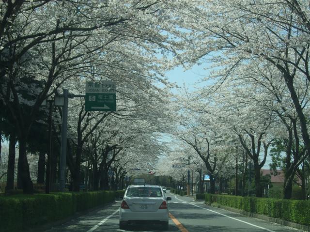 桜並木_b0120103_1904566.jpg