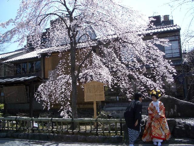 京都花見旅行_a0047004_1455544.jpg
