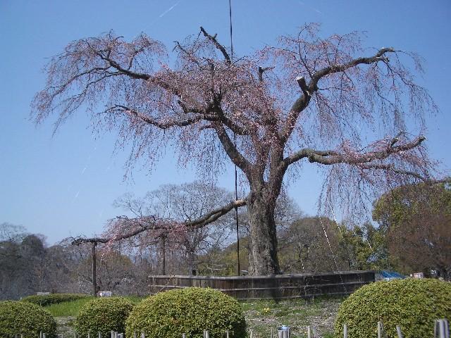 京都花見旅行_a0047004_149999.jpg