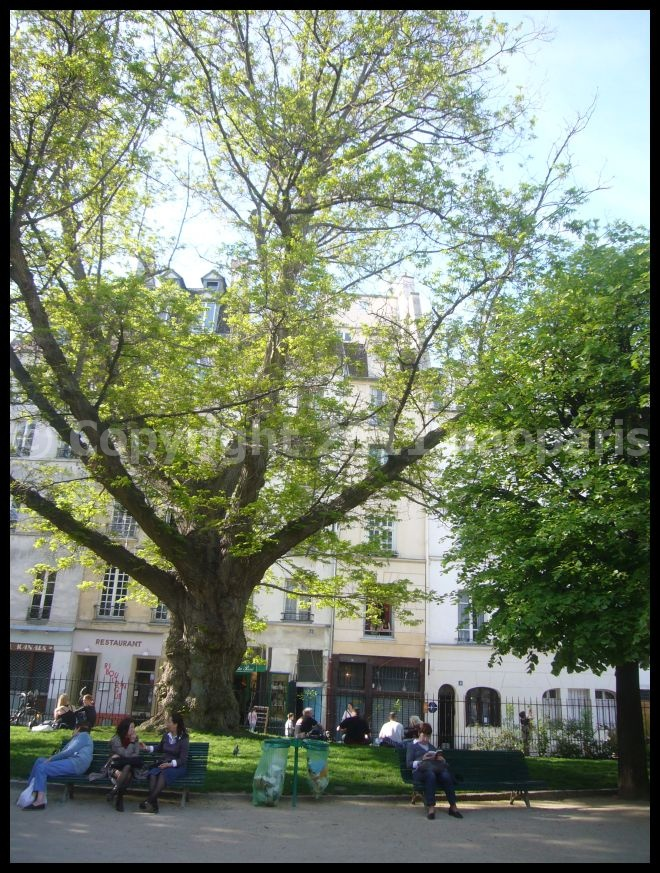 【サクラ】4月6日ノートルダム界隈(PARIS)_a0008105_19521347.jpg