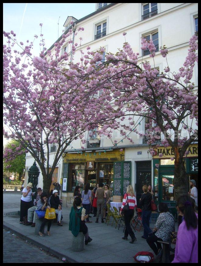 【サクラ】4月6日ノートルダム界隈(PARIS)_a0008105_19524041.jpg