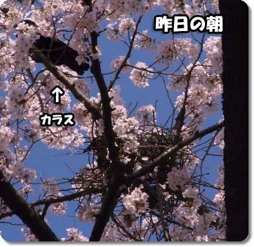 c0133013_11261229.jpg