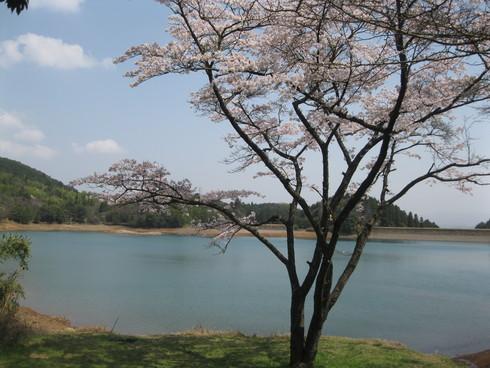 「桜満開~!!!!GGV日田」へ~~_a0125419_8591364.jpg
