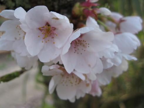 「花見ギャザリング」~~_a0125419_914249.jpg