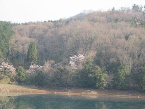「IBIZA花見会」へ~~_a0125419_941588.jpg