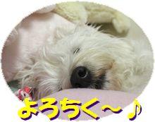 f0084422_1262453.jpg