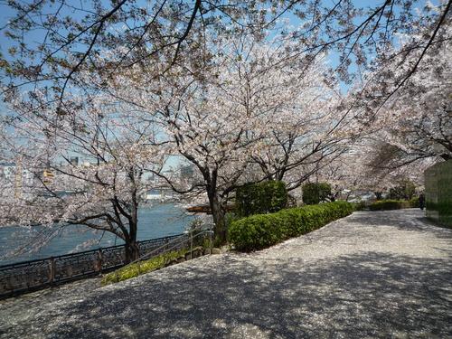 心を癒してくれる桜。。_b0211926_15211833.jpg