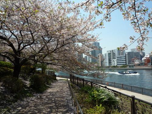 心を癒してくれる桜。。_b0211926_15215054.jpg