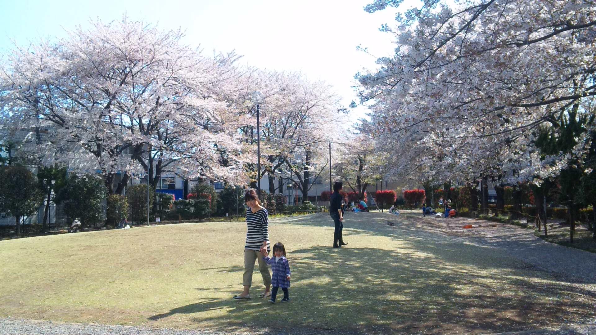 今年の桜も_d0004728_17411096.jpg