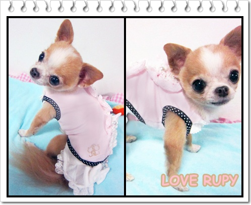 RUPY[2011 Early Summer Collection]先行予約のお知らせ_b0084929_04386.jpg