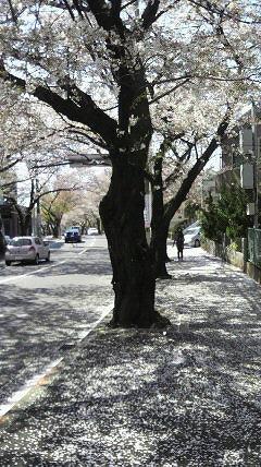 花散らしの風が・・・・。_e0054438_19121984.jpg