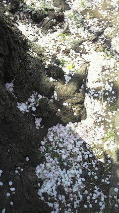 花散らしの風が・・・・。_e0054438_19123090.jpg