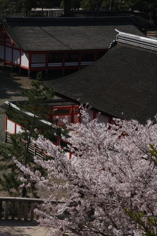 春の宮島_b0190540_20542872.jpg