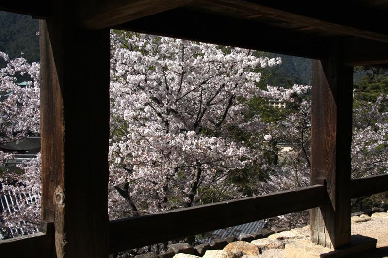 春の宮島_b0190540_2054396.jpg