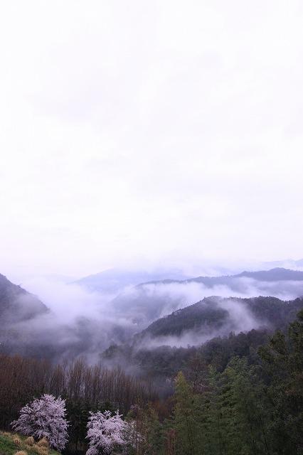 山と桜と風格(品格)と・・・_b0168041_1749223.jpg
