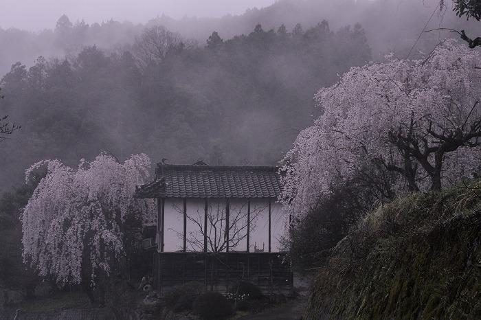 山と桜と風格(品格)と・・・_b0168041_1756545.jpg