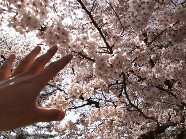 奈良ホテルに泊まり町を歩く_b0166144_7572348.jpg