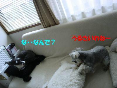 b0206444_2210210.jpg